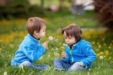 Sezon na alergie rozpoczął się na dobre. Dokuczliwy katar, męczące zapalenie spojówek i trudności w oddychaniu potrafią uprzykrzyć życie dorosłym i dzieciom, zwłaszcza kilkulatkom