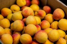 Morele to jedne z najzdrowszych owoców