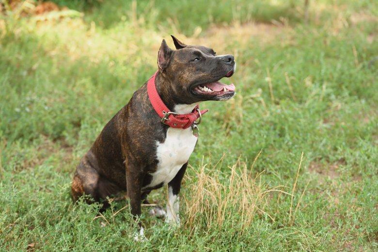 Z tytułu polisy OC zostanie wypłacone odszkodowanie w sytuacji, gdy pies ubezpieczonego wywoła szkodę u osoby trzeciej