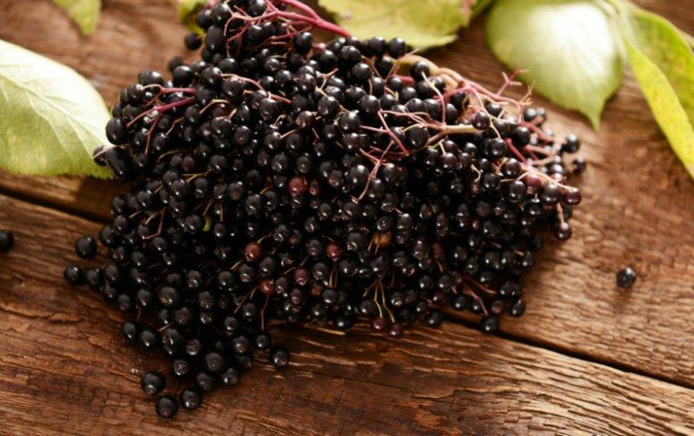 Owoce czarnego bzu zawierają polifenole - substancje poprawiające pracę układu immunologicznego