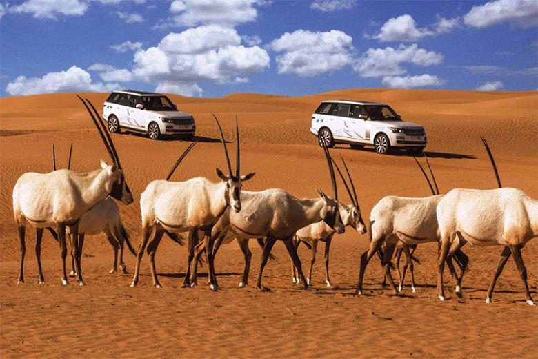 Na pustyni w okolicach Dubaju znajduje się ogród zoologiczny, w którym można zobaczyć uznawane za gatunek zagrożony oryksy.