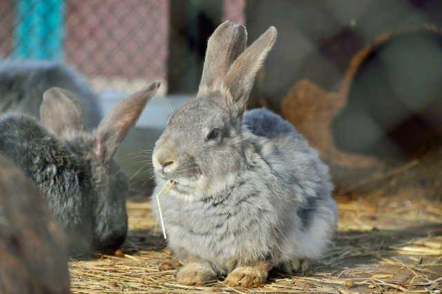 Drastyczna lekcja: nauczyciel na oczach dzieci zabił królika