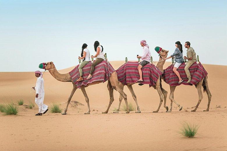 Wycieczki po pustyni na grzbiecie wielbłądów to przygoda w Dubaju, z której koniecznie trzeba skorzystać