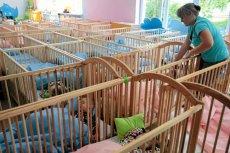 Przeciętne dziecko chodzące do żłobka spędza w nim 39 godzin tygodniowo. O 12 godzin dłużej niż jego rówieśnicy w innych krajach europejskich.