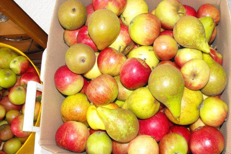 Polskie owoce, których właściwości wciąż nie doceniamy!