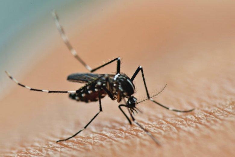 Z komarami można walczyć naturalnie - ze skutkami ich ugryzień też