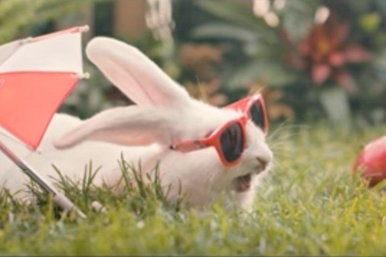 Nowa kampania Ministerstwa Zdrowia przekonuje, by ludzie zachowywali się jak króliki.