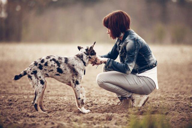 Fot. [url=http://www.splitshire.com/girl-playing-with-puppy/]Splitshire[/url] / [url=http://www.splitshire.com/about/]Daniel Nanescu[/url]