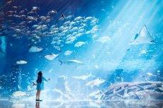 Jak poznać podwodny świat? W jaki sposób dowiedzieć się wiele ciekawostek o życiu morskich zwierząt? Jest to możliwe na wycieczce do Dubaju