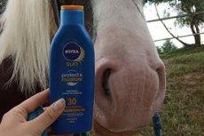 Końskie pyszczki, jak się okazuje, również należy smarować kremem z filtrem