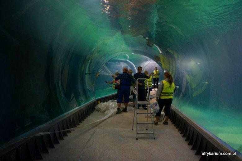 Ostatnie przygotowania przed wielkim testowaniem. Imponujący tunel przebiegający przez akwarium.