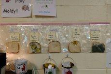 Eksperyment z chlebem to niezapomniana lekcja higieny