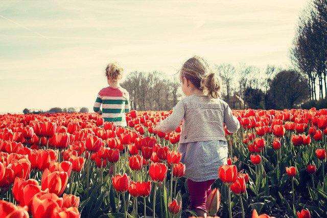 Fot. Pixabay / [url=https://pixabay.com/pl/dziewczyny-dzieci-tulipany-holandia-739071/]benscherjon[/url] / [url=https://pixabay.com/pl/service/terms/#usage]CC0 Public Domain[/url]