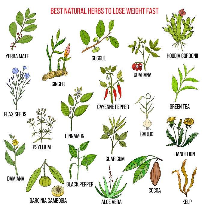 Damiana jest wymieniana wśród najlepszych naturalnych roślin. Zajmuje miejsce obok takich sław jak czosnek, imbir, yerba mate, zielona herbata czy aloes.