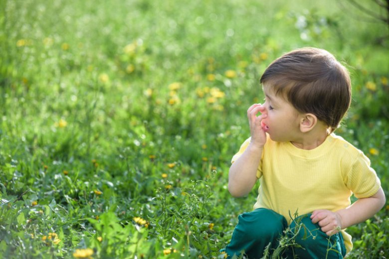 Co pyli w maju? Lista roślin  wywołujących alergie