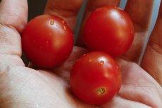 W pomidorach znajdziecie witaminę C i E, beta-karoten i potas