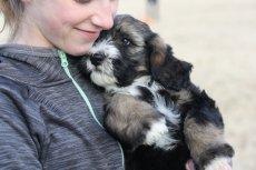 52 proc. właścicieli psów woli okazywać czułość im, niż swoim partnerom