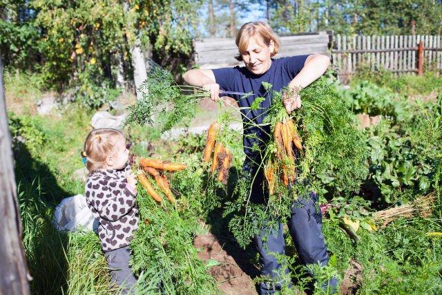Owoce i warzywa z przydomowego ogródka swój smak zawdzięczają sposobowi dojrzewania, zbioru i przechowywania.