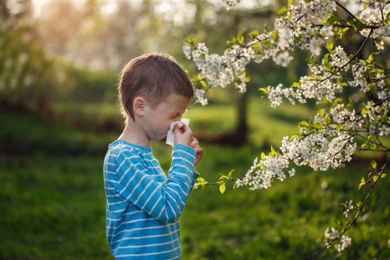 Wiosną i latem najbardziej powszechne są reakcje alergiczne związane z pyleniem traw, ziół i drzew