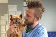 Rodzina zostawiła 12-letniego psa w lecznicy