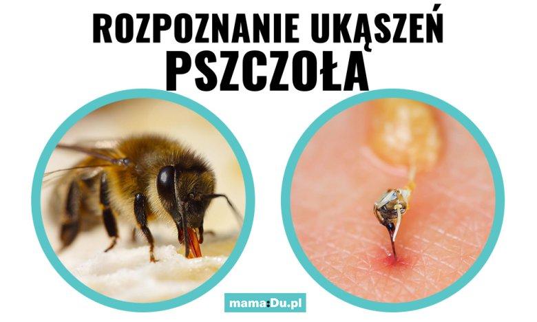Jak wygląda ukąszenie przez pszczołę?