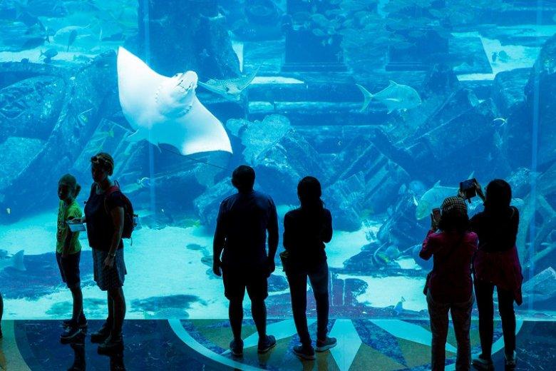 Leżące w podziemiach luksusowego hotelu Atlantis The Palm akwarium stanowi schronienie dla blisko ponad 65 000 morskich zwierząt rozdzielonych na 20 ekspozycji.