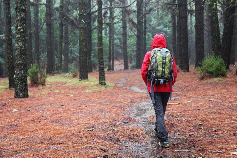 Strzyżak - niebezpieczny owad w lasach.