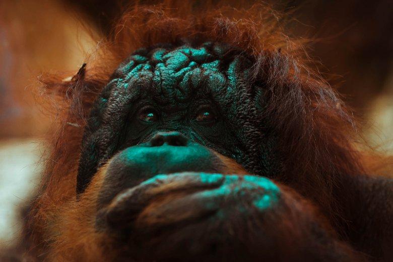 """Seria książek o zwierzętach to wejście w podobny świat, jaki przedstawiony jest w serialu """"Planeta Ziemia"""" na Netflixie"""