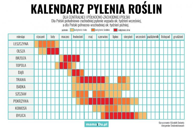 Kalendarz pylenia 2019 - co i kiedy pyli