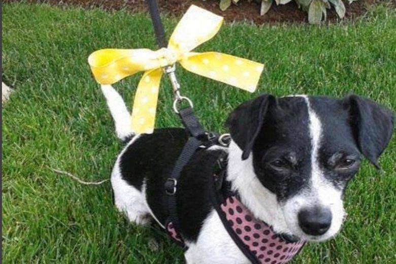 Żółta kokarda u psa to znak.