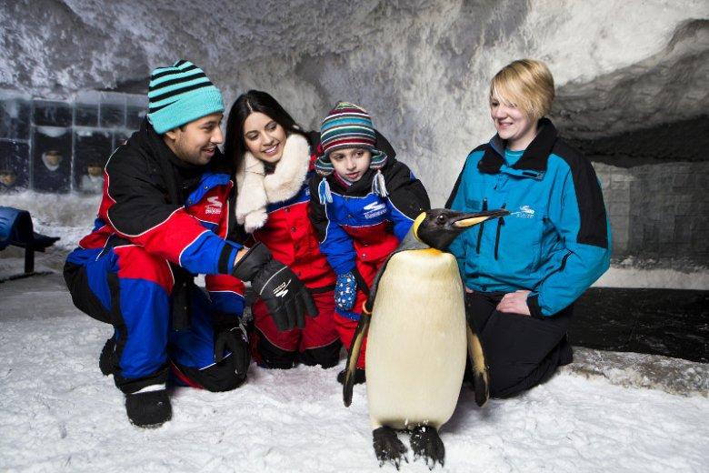W ośrodku sportów zimowych Ski Dubai można zobaczyć pingwiny