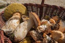 Czy można jeść grzyby w ciąży?