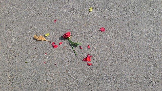 Fot. Pixabay /[url=http://pixabay.com/pl/rose-kwiat-broken-z%C5%82amane-serce-640443/]parthrpatel800[/url] / [url=http://bit.ly/CC0-PD]CC0 Public Domain[/url]