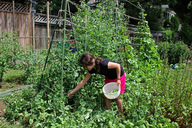 Fot. Flickr/[url=https://www.flickr.com/photos/wwworks/4673059779/]woodleywonderworks[/url] / [url=http://bit.ly/mamadu]CC BY[/url]
