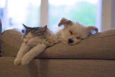 Głównym bohaterem książki ''Psierociniec: Niepiesek'' jest pies, który myślał, że jest kotem. Ilustrowana powieść dla dzieci porusza problem tolerancji i odmienności