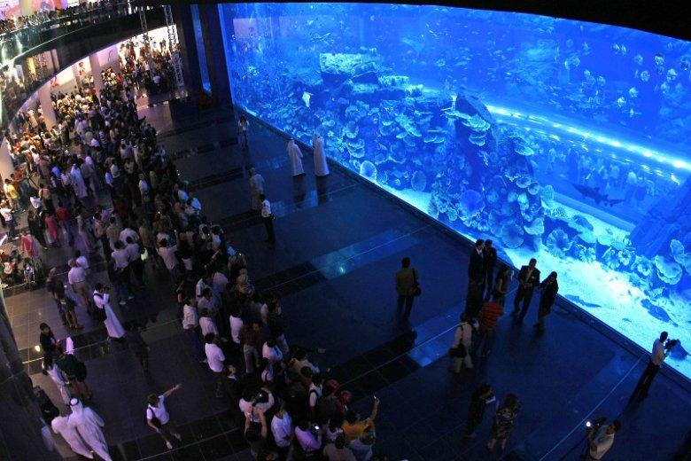 W gigantycznym akwarium Dubai Aquarium and Underwater Zoo w galerii handlowej Dubai Mall żyje ponad 33 tysiące gatunków zwierząt wodnych, w tym rekiny, manty, wydry i piranie
