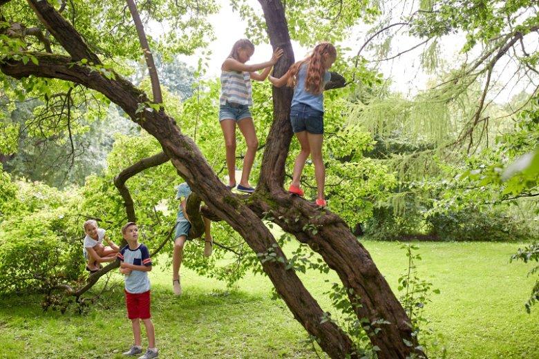 Wielu rodziców nie zdaje sobie sprawy z korzyści, jakie daje wspinanie się na drzewo