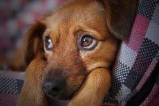 Pies upodabnia się do właściciela? To prawda niebezpieczna dla psów