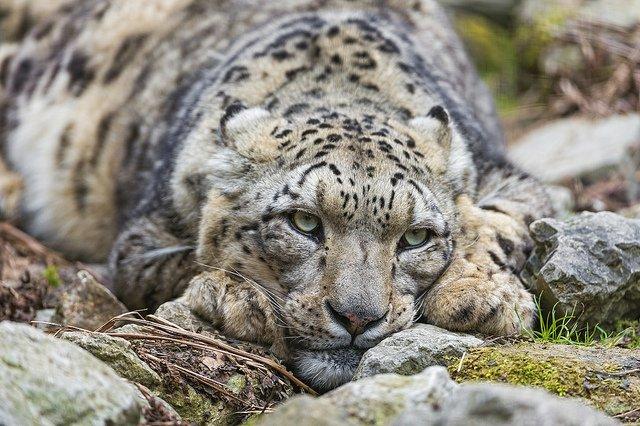 Fot. [url=http://skroc.pl/b12fe]Tambako The Jaguar[/url] / [url= http://goo.gl/OOAQfn]CC BY[/url]