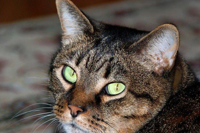Gdyby nie kotka, porzuconemu dziecku nie udałoby się przetrwać nocy.
