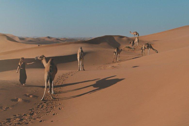 Sylwia Przeplata w towarzystwie wielbłądów na pustyni otaczającej Dubaj